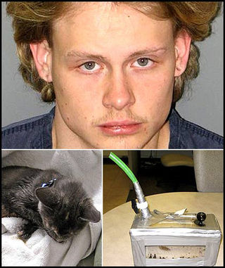 Kitty-bong