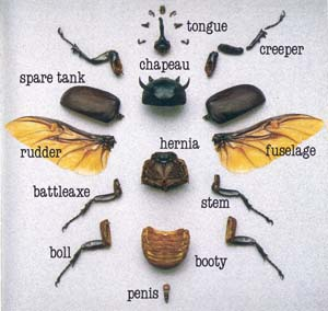 Weevil Diagram
