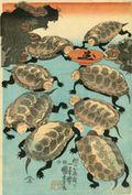 Si_turtles_sm