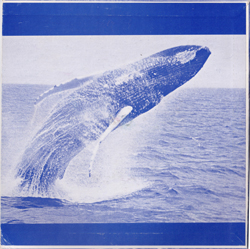 Whales250