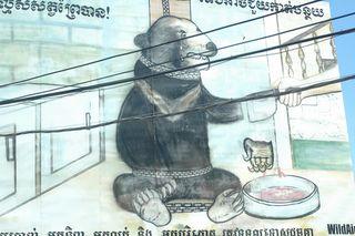 Bear paw sign