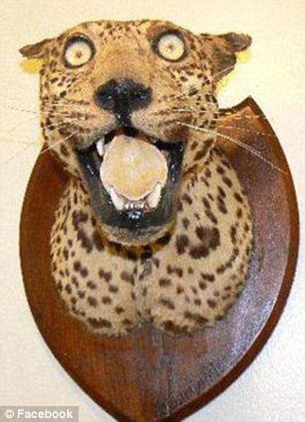 When_taxidermy_goes_wrong_640_13