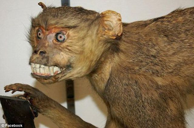 When_taxidermy_goes_wrong_640_18