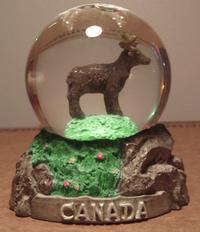 Canadian_moose_snowstorm