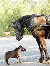 Horse081006_536x700