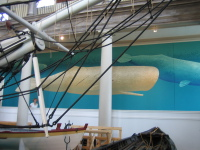 Whale_museum