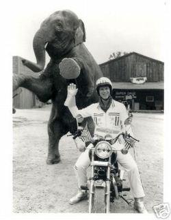 Super_dave_elephant