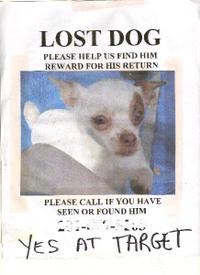 Lost_dog_3