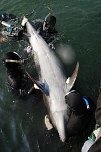 4fin_dolphin_1
