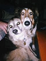 Cheryldogs