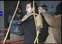Saddambush