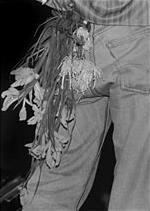 Wfjsnmorrisseyflowers